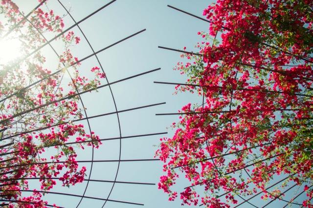LA-Vacation (Photo ©by Mako Fuwa)
